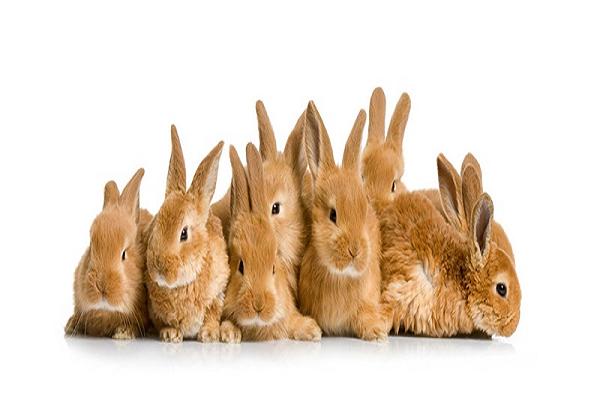 Esterilizar conejo precio