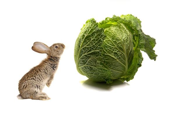 No debes darle al conejo