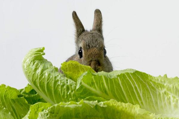 Que cosas envenenan a los conejos