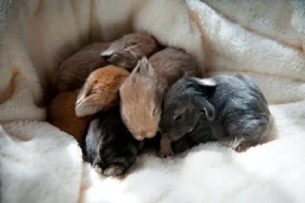 Gazapos de conejos