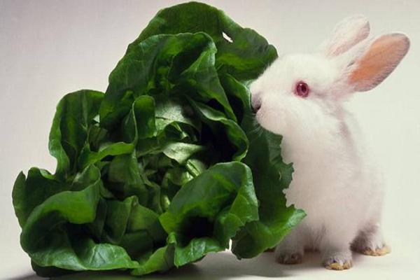 ¿Qué es venenoso para los conejos?