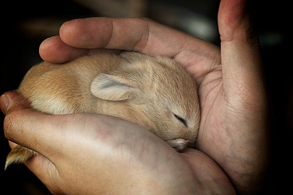 ¿Cuánto tiempo se amamanta a un conejo?