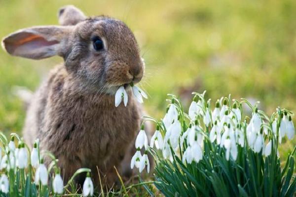 ¿Cómo saber si tu conejo está intoxicado?