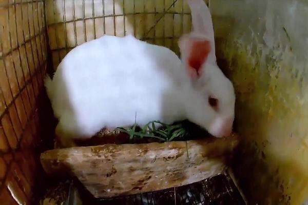 ¿Cuántas crías llega a tener un conejo?