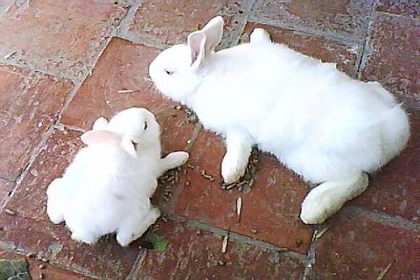 Como curar la pata rota de un conejo