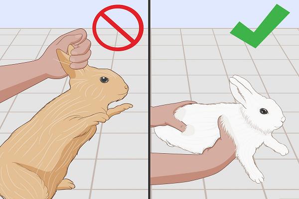 ¿Qué hacer si se le rompe una pata a un conejo?