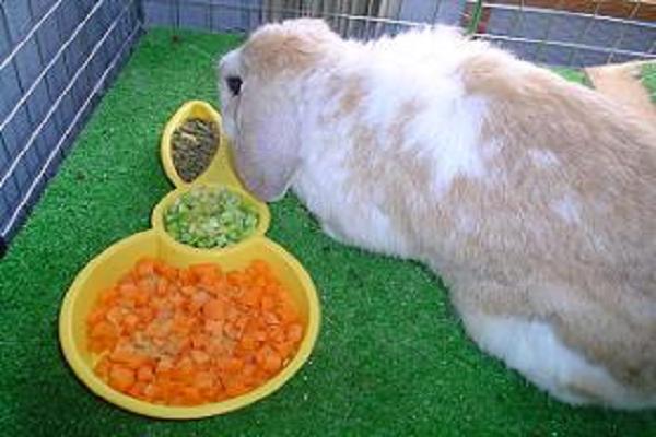 Que se le puede dar a una coneja para que tenga leche