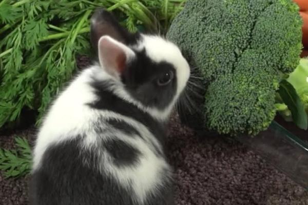 Como engordar a un conejo desnutrido