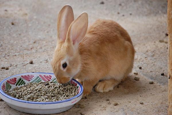 Alimentación para conejo de engorde