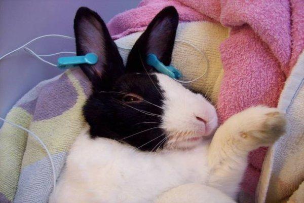 Como curar el resfriado en conejos