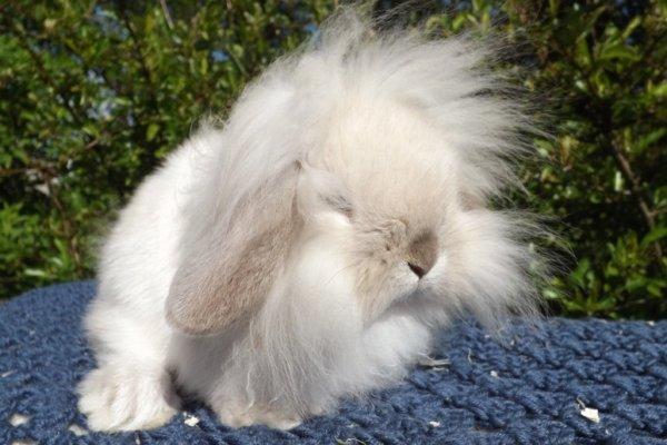 Tratamiento para la caída de pelo en conejos