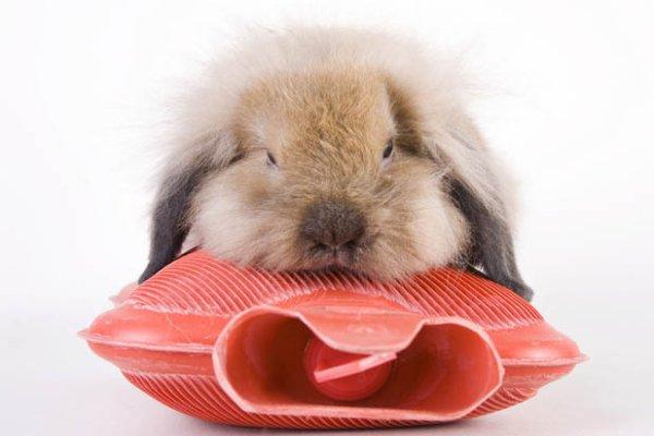 Como tratar a un conejo con resfriado