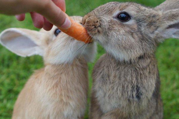 Como combatir la diarrea en los conejos