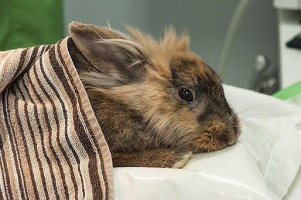Que medicamento es bueno para la diarrea de un conejo
