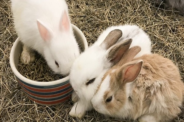 Mi conejo no defeca