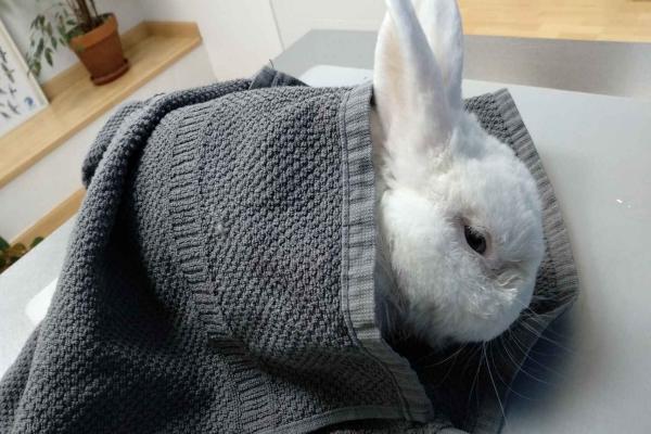 Cuales son los síntomas de un conejo envenenado