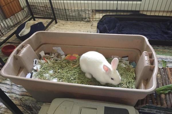 como hacer un arenero para conejos