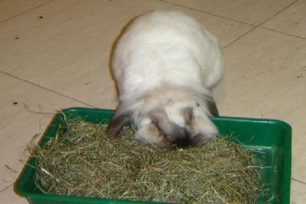 Cuánta arena usar en una caja de arena para conejos