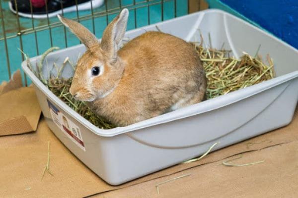 Como hacer arena para conejos