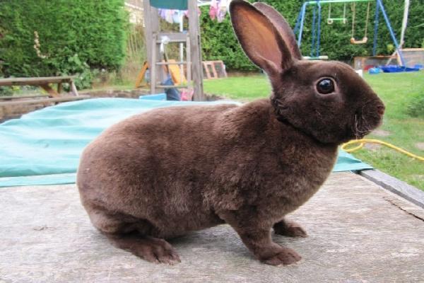 Origen del conejo la habana