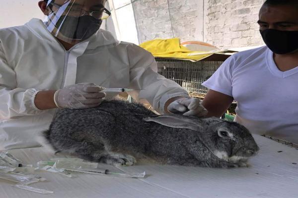 Las vacunas para conejos