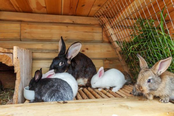 Mantenimiento de la jaula para conejos