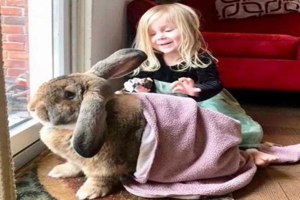 El pelo de conejo es malo