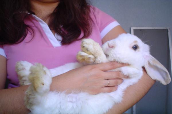 Como limpiar la cola del conejo