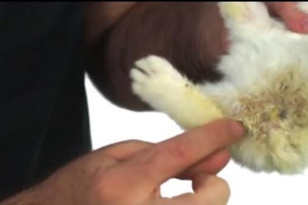 Como limpiar las patitas de mi conejito