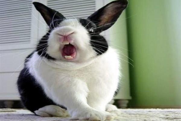 Problemas de conducta en conejos