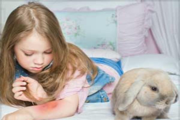 Tratamiento de la tularemia en conejos.