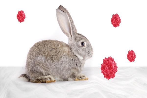 Enfermedades hemorrágicas de conejos