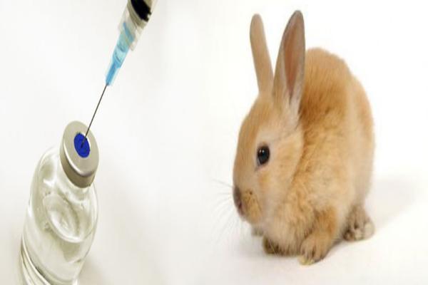 Los conejos beben vacunarse
