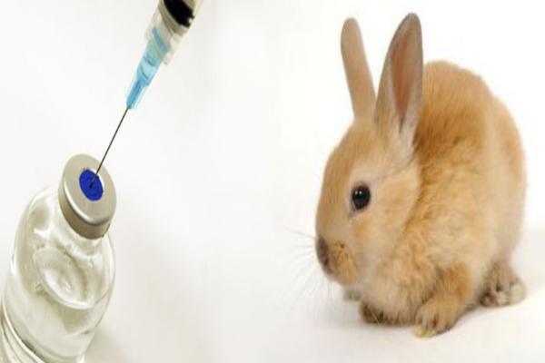 ¿Cómo evito que mi conejo se contagie de mixomatosis?