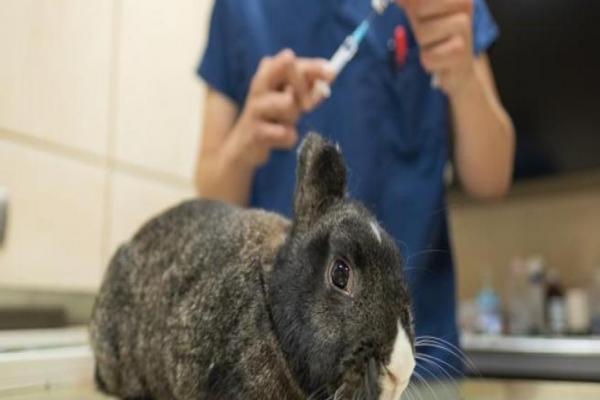 Cáncer en conejos y sus consecuencias