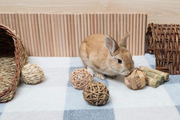 Como mantener un conejo en casa