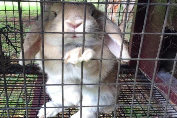 Hongos en las patas de conejos