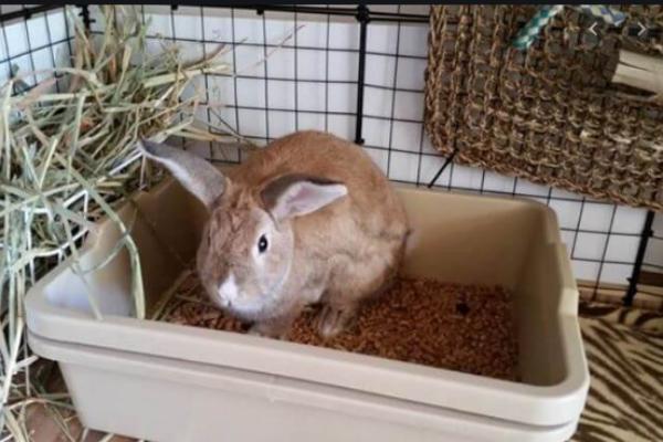 Bandeja de arena para conejos