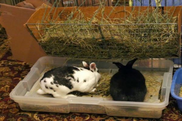 ¿Cómo cortar las uñas a un conejo en casa?