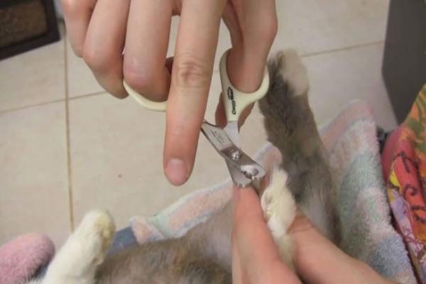 Que pasa si no le cortas las uñas a un conejo