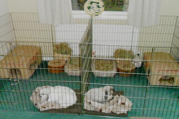 Conejos cuidados y enfermedades