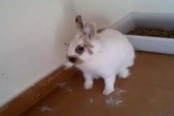 ¿Qué pasa si mi conejo se muda todo el año?