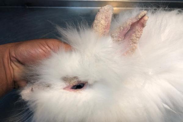 ¿Qué otros tumores pueden sufrir los conejos?