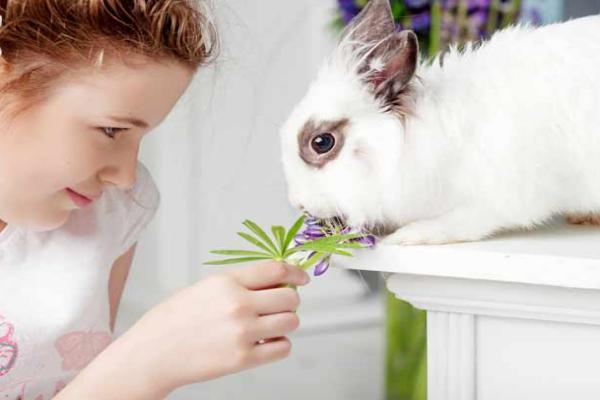 ¿Cómo mantener un conejo en casa sin riesgos?