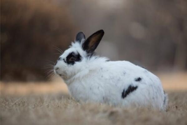 Entrenamiento para ir al baño en los conejos