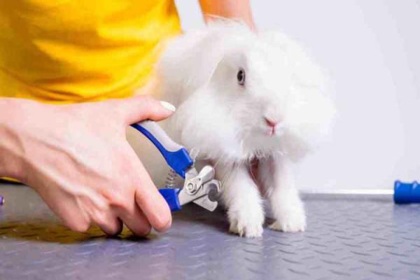 Cortauñas para conejos