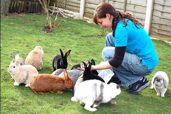 ¿Cómo mantener un conejo en casa?