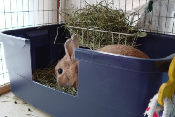 Cada cuanto hace popo un conejo