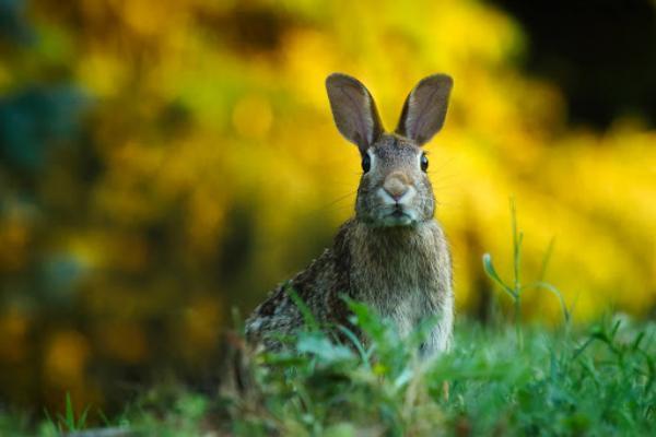 Vida útil del conejo