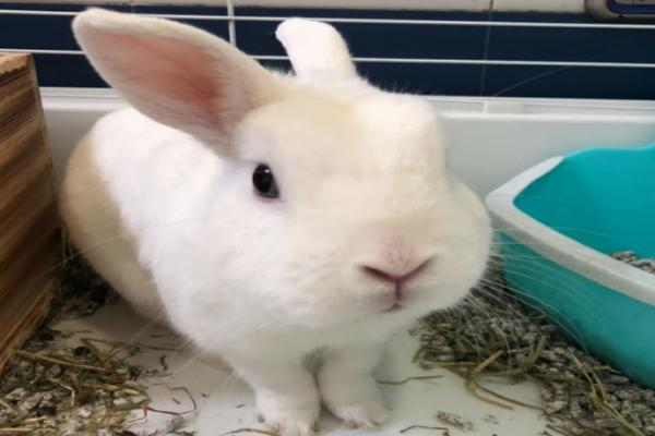 Bolas de pelo en el estomago de conejos
